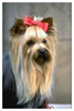 Dog Breeds (W X Y) Ecards Category