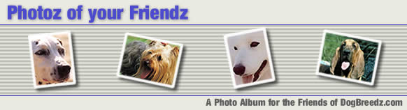 Photoz of Friendz - A photo album for the friends of DogBreedz.com