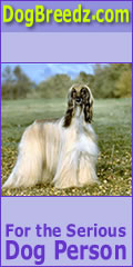 Afghan Hound pictures, photos, information and Ecards
