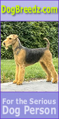 Airedale Terrier pictures, photos, information and Ecards