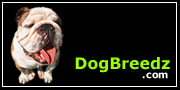 Bulldog pictures, photos, information and Ecards