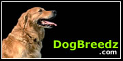 Golden Retriever pictures, photos, information and Ecards
