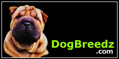 Chinese Shar-Pei pictures, photos, information and Ecards