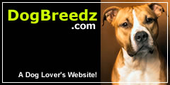 American Staffordshire Terrier pictures, photos and information.