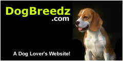 Beagle pictures, photos and information.