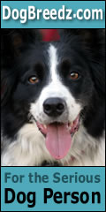 Border Collie pictures, photos and information.